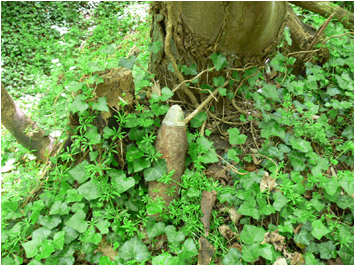 Unexploded Shells on the Flanders Battlefield